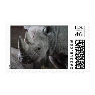 Foto del rinoceronte negro franqueo