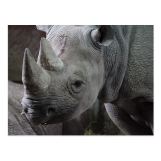 Foto del rinoceronte negro tarjeta postal
