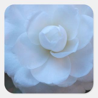Foto del rosa blanco admitida el barrio francés pegatina cuadrada