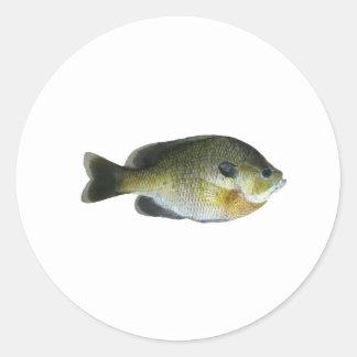 Foto del Sunfish del Lepomis macrochirus Pegatina Redonda