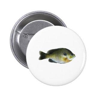 Foto del Sunfish del Lepomis macrochirus Pin