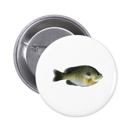 Foto del Sunfish del Lepomis macrochirus Pin Redondo 5 Cm