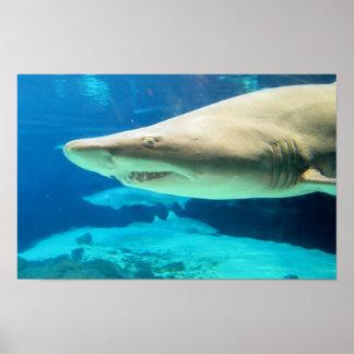 Foto del tiburón poster