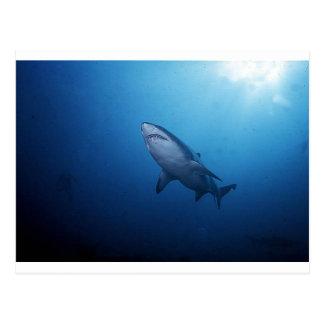 Foto del tiburón tarjeta postal