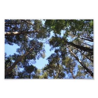 Foto del toldo de bosque del pino