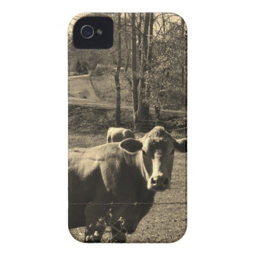 Foto del tono de la sepia de la vaca de Brown iPhone 4 Case-Mate Carcasas
