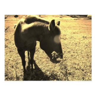 Foto del tono de la sepia del caballo marrón con l postal