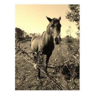 Foto del tono de la sepia del caballo marrón con l tarjeta postal
