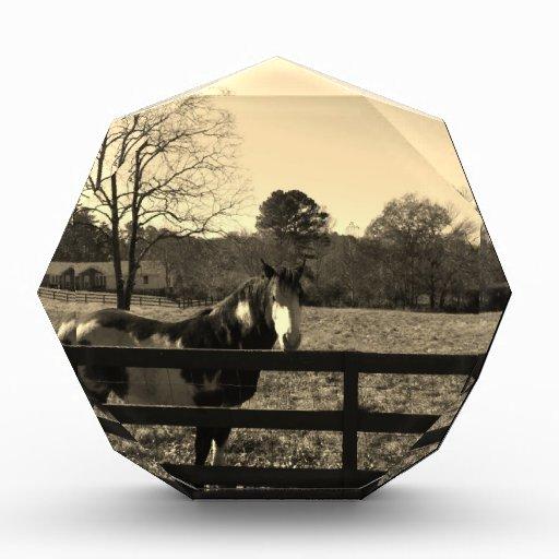 Foto del tono de la sepia del caballo marrón y bla