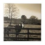 Foto del tono de la sepia del caballo marrón y bla azulejos ceramicos