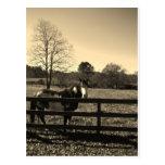 Foto del tono de la sepia del caballo marrón y postal