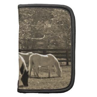 Foto del tono de la sepia del caballo organizador