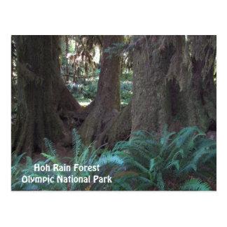 Foto del viaje de la selva tropical de Hoh Postal
