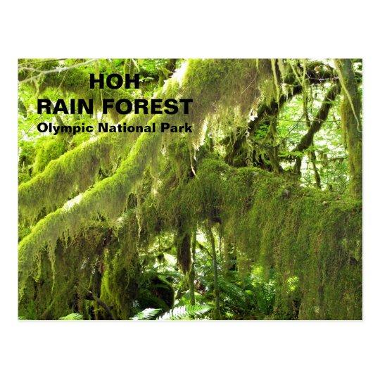 Foto del viaje de la selva tropical de Hoh Tarjetas Postales