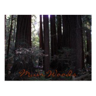 Foto del viaje de maderas de Muir Tarjetas Postales