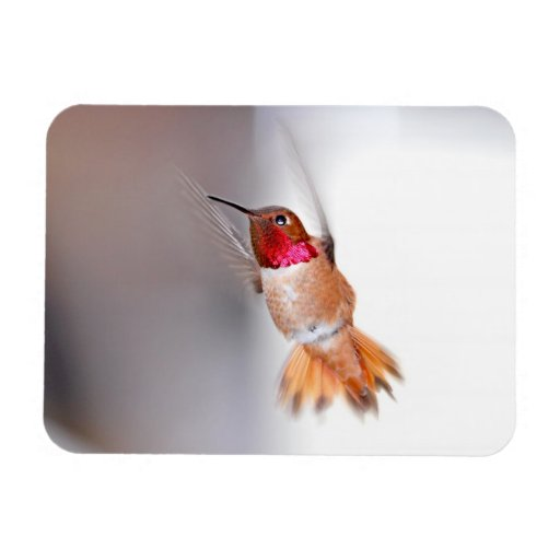 Foto del vuelo del colibrí iman