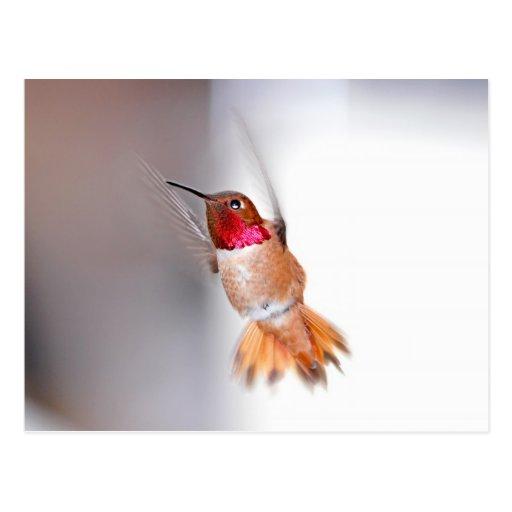 Foto del vuelo del colibrí postales