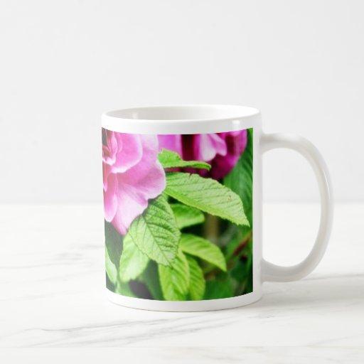 Foto detallada de la flor color de rosa tazas
