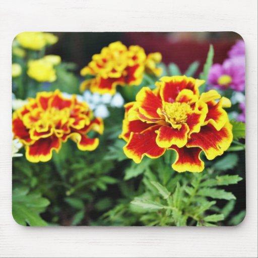 Foto detallada de varios flor americana de la mara tapete de raton