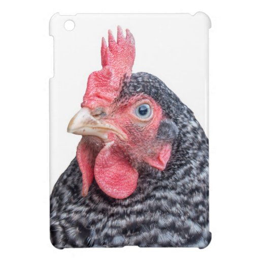Foto divertida de la gallina del pollo que frunce