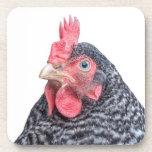 Foto divertida de la gallina del pollo que frunce  posavasos