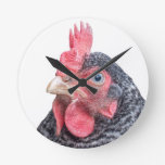 Foto divertida de la gallina del pollo que frunce  reloj de pared