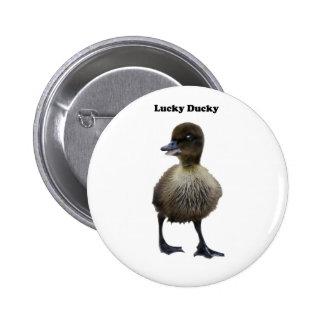 Foto divertida del anadón del pato afortunado