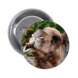 Foto divertida del animal de la fauna del camello pin