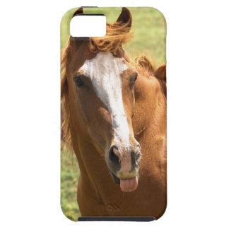 Foto divertida del caballo que pega la foto animal funda para iPhone SE/5/5s