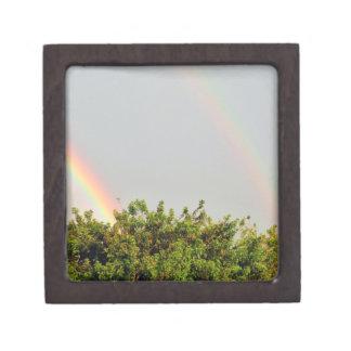 Foto doble del arco iris con el cielo y los árbole caja de recuerdo de calidad