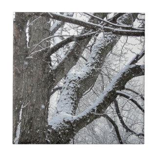 Foto E.L.D. de las ramas de árbol del hielo del in Azulejo Cuadrado Pequeño