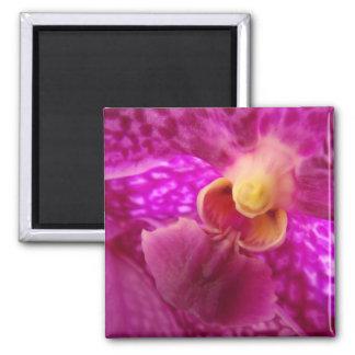 Foto elegante del gráfico de la orquídea imán cuadrado