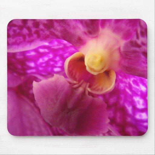 Foto elegante del gráfico de la orquídea tapetes de ratones