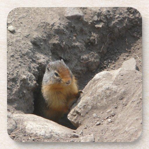 Foto emergente del roedor posavasos de bebida
