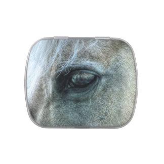 Foto equina del caballo blanco del ojo hermoso de frascos de dulces