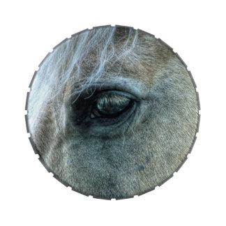 Foto equina del caballo blanco del ojo hermoso de jarrones de dulces