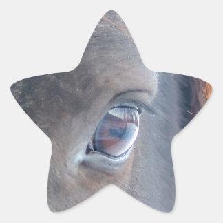 Foto equina del ojo del caballo hermoso calcomanía forma de estrella personalizadas