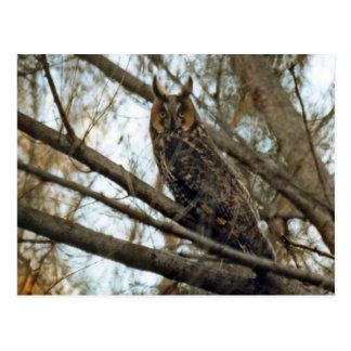 Foto espigada larga del búho postales