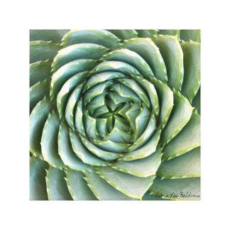 Foto espiral del áloe de Debra Lee Baldwin Impresión En Lienzo