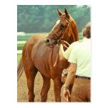 Foto excelente afirmada 1978 del caballo de carrer tarjetas postales