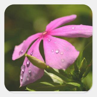 Foto floral de alta calidad pegatina cuadrada