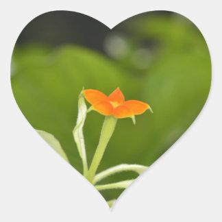 Foto floral de alta calidad pegatina en forma de corazón