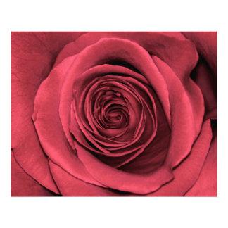 Foto floral de la flor color de rosa rosada
