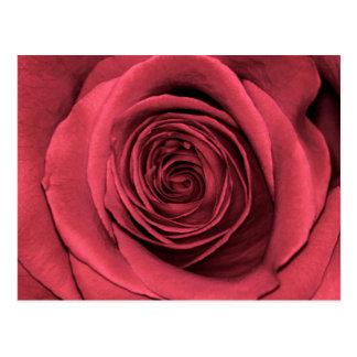 Foto floral de la flor color de rosa rosada postal