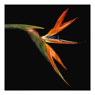 Foto floral de la flor hermosa de la ave del