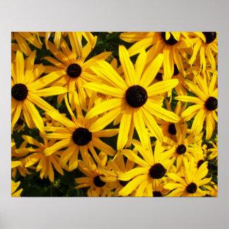 Foto floral observada negro de Susans Póster