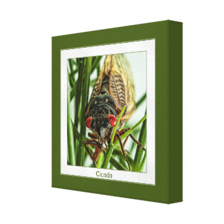 Foto grande de la macro del insecto de la cigarra lienzo envuelto para galerías