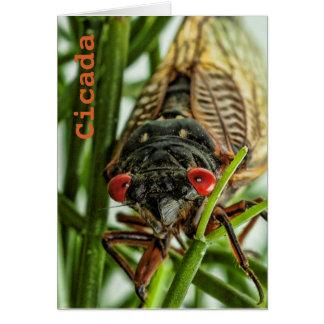 Foto grande de la macro del insecto de la cigarra tarjeta pequeña