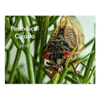 Foto grande de la macro del insecto de la cigarra tarjetas postales