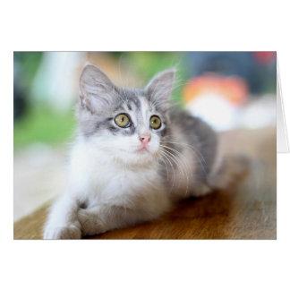 Foto gris y blanca linda Notecard del gatito Tarjeta Pequeña